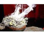 Herbalist healer Johannesburg,Cape town,Port Elizabeth,Polokwane +27732426269
